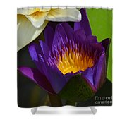Just Opening Purple Waterlily -  Square Shower Curtain
