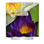Just Opening Purple Waterlily With White - Vertical Shower Curtain