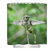 Just Spread Your Wings  Shower Curtain
