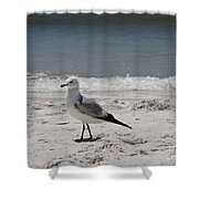 Just Strolling Along Shower Curtain by Megan Cohen