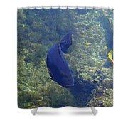 Just Swimming Around Shower Curtain