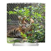 Just Waking Up Shower Curtain
