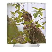 Juvenile Bald Eagle In Leaves Shower Curtain
