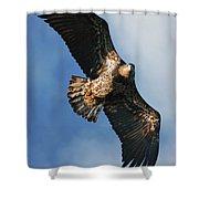 Juvenile Bald Eagle Two Shower Curtain