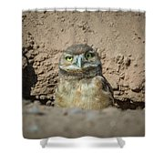 Juvenile Burrowing Owl-img_164817 Shower Curtain