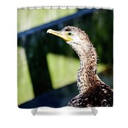Juvenile Cormorant Profile Shower Curtain