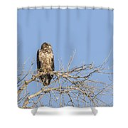 Juvenile Eagle 2015-7 Shower Curtain