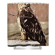 Juvenile Eagle Shower Curtain