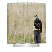 Juvenile Eagle On Post Shower Curtain