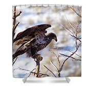Juvenile Eagle Taking Off   Shower Curtain