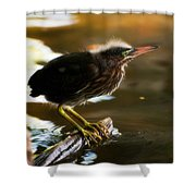 Juvenile Green Heron Shower Curtain
