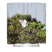 Juvenile Little Blue Shower Curtain