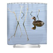 Juvenile Little Grebe Tachybaptus Ruficollis Shower Curtain