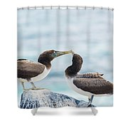 Juvenile Nazca Booby In Galapagos Shower Curtain
