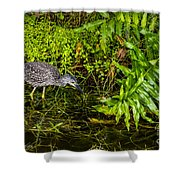 Juvenile Night Heron Shower Curtain