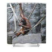 Juvenile Orangutan Shower Curtain