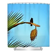 Juvenile Red Vented Bubbul Shower Curtain