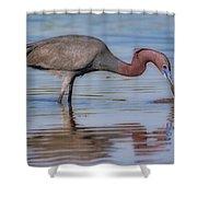 Juvenile Reddish Egret Shower Curtain