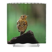 Juvenile Robin Shower Curtain