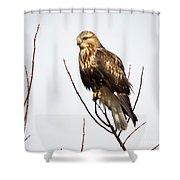 Juvenile Rough-legged Hawk  Shower Curtain