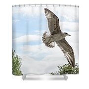 Juvenile Seagull In Flight Shower Curtain