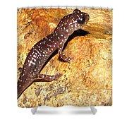 Juvenile Slimy Salamander Shower Curtain