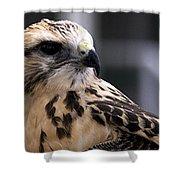 Juvenile Swainson's Hawk Shower Curtain