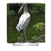 Juvenile Wood Stork Shower Curtain
