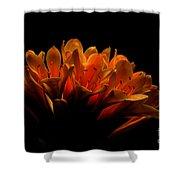 Kaffir Lily Shower Curtain