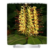 Kahili Ginger Shower Curtain
