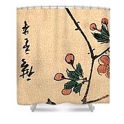 Kaido Ni Shokin IIi - Small Bird On A Branch Of Kaidozakura IIi Shower Curtain