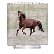 Kaimanawa Stallion Shower Curtain
