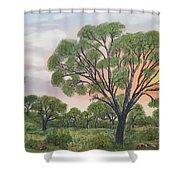 Kalahari Shower Curtain