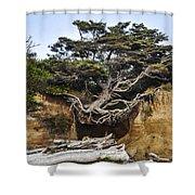 Kalaloch Hanging Tree Shower Curtain