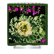 Kale With Petunias Shower Curtain