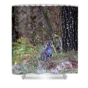 Kangaroo In The Forest Shower Curtain