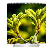 Kangaroo Paw 2 Shower Curtain
