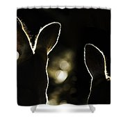 Kangaroos Backlit Shower Curtain