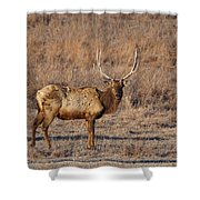 Kansas Elk Shower Curtain
