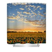 Kansas Sunflowers At Sunset Shower Curtain