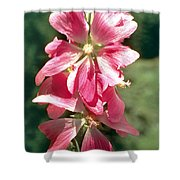 Kashmir Tree Mallow  Shower Curtain