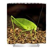 Katydid Close Up Bug Shower Curtain