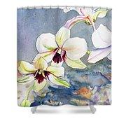 Kauai Orchid Festival Shower Curtain