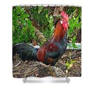 Kauai Rooster Shower Curtain