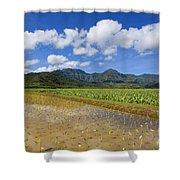 Kauai Wet Taro Farm Shower Curtain
