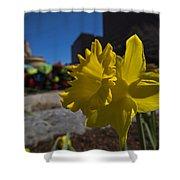 Kayak Launch Daffodil Cambridge Ma Shower Curtain
