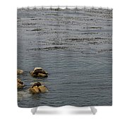 Kayakers And Seal Lions Shower Curtain