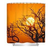 Keawe Tree At Sunset Shower Curtain