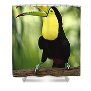 Keel Billed Toucan Calling Shower Curtain