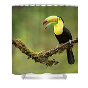 Keel Billed Toucan Perched On A Branch In The Rain Forest Shower Curtain